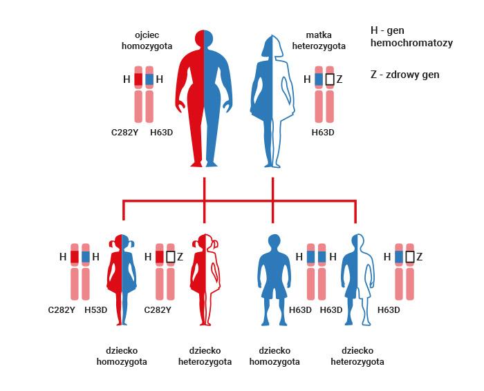 dziedziczenie hemochromatozy
